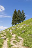 pic of bavarian alps  - Trees in the mountains of the Bavarian Alps Germany - JPG
