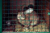 stock photo of rabbit hutch  - cute rabbit in a green cage hand zoo - JPG