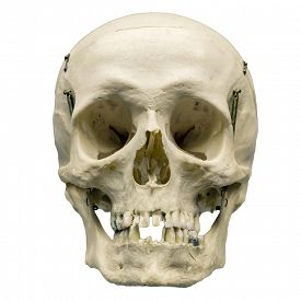 picture of skull  - Human skull on isolated white background - JPG