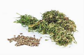 pic of seed bearing  - Hemp seeds and dried cannabis twigs in a white background - JPG