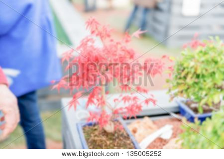 Defocused Background Of Red Plant In A Greenhouse