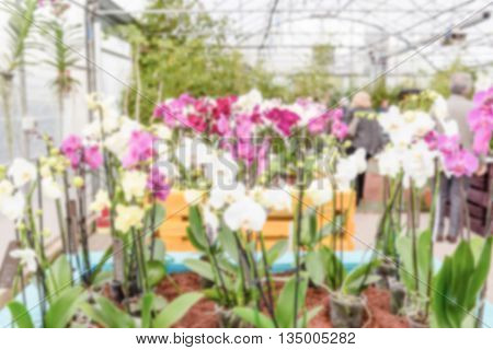 Defocused Background With Beautiful Colorful Mix Of Phalaenopsis Orchids