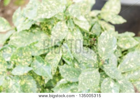 Defocused Background With Green Plants Inside A Greenhouse