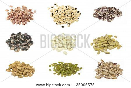 Nine beans type on the white background