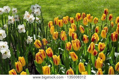 Flowers in Keukenhof park Lisse. Netherlands. beauty