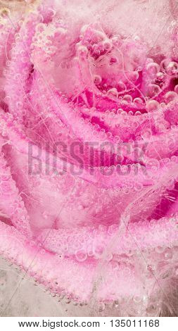 Bright frozen abstraction with bright pink rose frozen in clear water with air bubbles