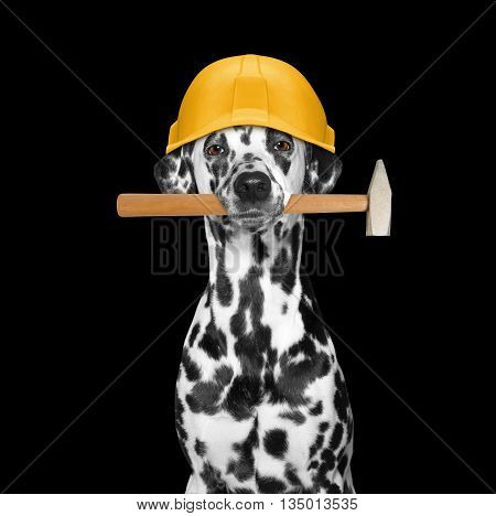 dog builder holding tools in its mouth -- isolated on black