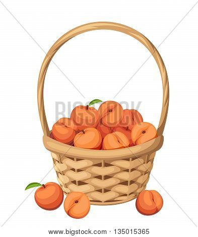 Vector woven basket with peach fruit isolated on a white background.