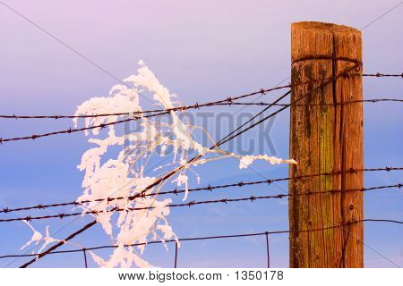 Tumbleweed In Fence