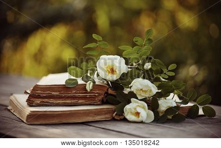 White dogrose lies on the old books on a wooden table