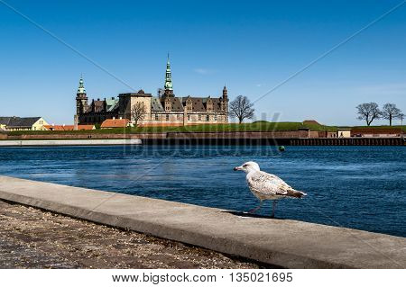 Kronborg Castle, residence of Hamlet, with a seagull in vew, settled in a town Helsingor, north of Copenhagen, Denmark landmark in Copenhagen
