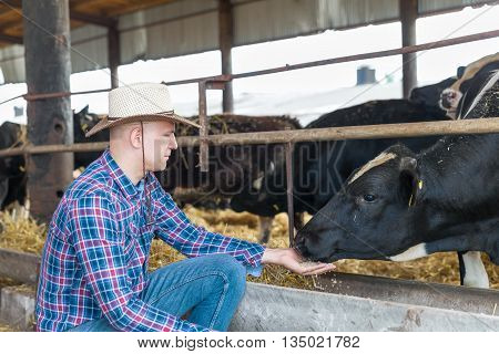 Cowboy and Cows. Portrait of a man on livestock farm.