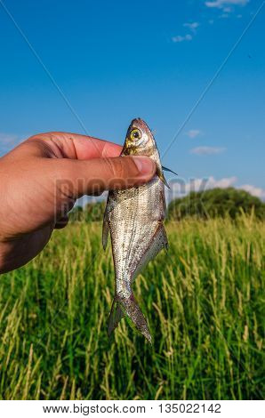 little silver fish in a hand shines from a sunlight