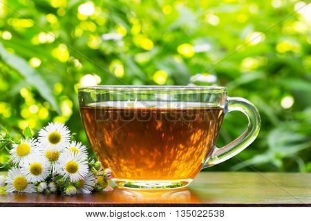glass cup of tea with camomile flowers and camomile on the natural green vegetation background closeup