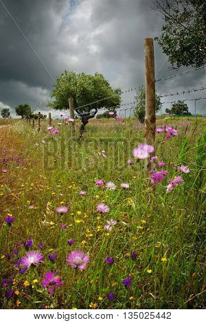 Countryside Spring landscape with wild vegetation and colorful flowers
