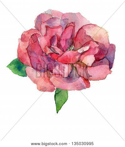 Red or pink rose flower watercolor drawing isolated JPG raster bitmap
