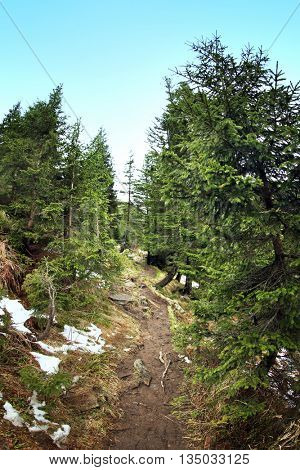 Narrow pathway in mountain forest