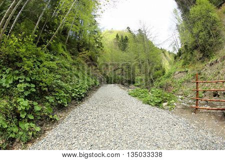 Footpath in picturesque Carpathians forest