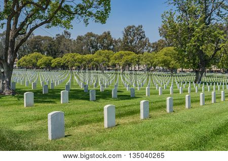 Lines Of Graves In Cemetery