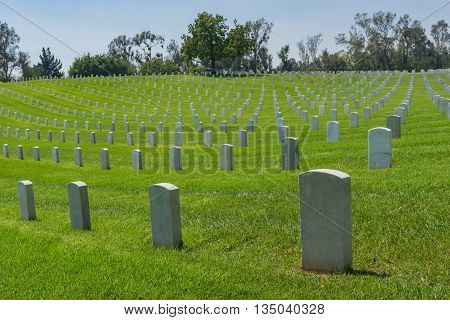 Hillside Of Military Graves