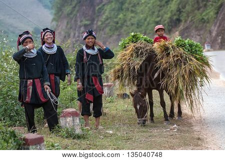HA GIANG, VIET NAM, August 24, 2015 the group of women, children, ethnic Hmong, ha Giang mountainous areas, breeding horses