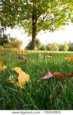 Fallen leaves on grass in early autumn