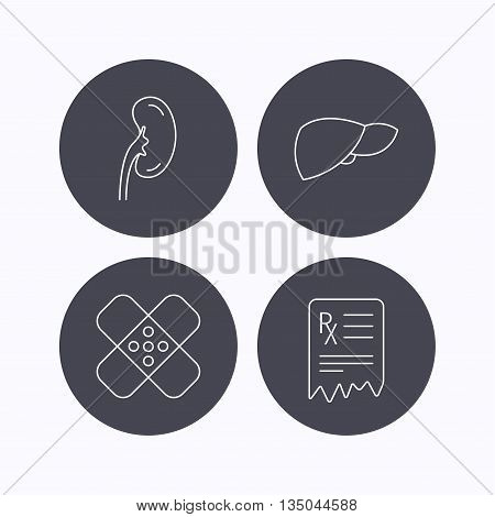 Liver, medical plaster and prescription icons. Kidney linear sign. Flat icons in circle buttons on white background. Vector