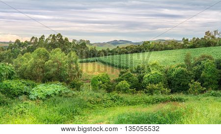 Agriculture And Nature On Summer Afternoon