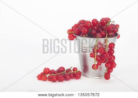 Red berries in tin bucket. Fresh ripe red currant berries on white background