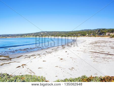 Beach with Grasses and Flowering and other Natural Vegetation. Carmel California