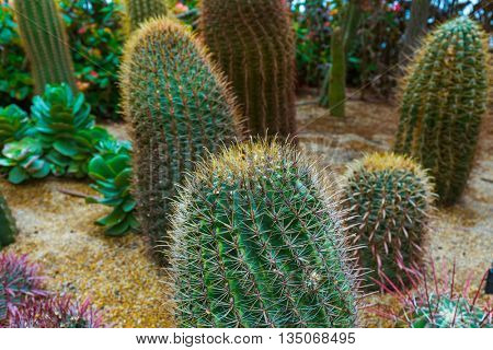 Cactus at Gardens by the Bay in Singapore - nature background