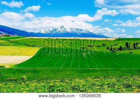 Beautiful landscape green and yellow meadow with field and snow mountain and village