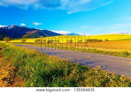 Road in a beautiful land with meadows and blooming field. And snow mountain in background. Slovakia Central Europe Liptov