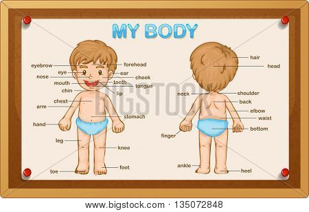 Littly boy and body parts illustration