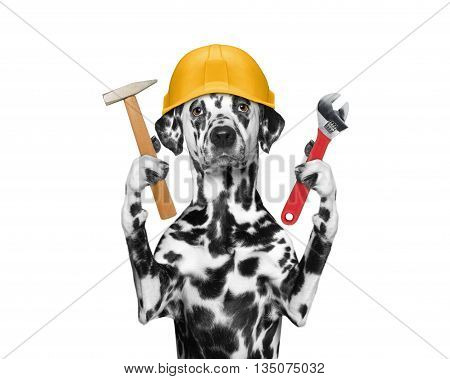 dog builder holding tools in its paws -- isolated on white