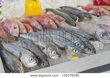 Collection Of Mullet Fish On Display In Seafood Restaurant
