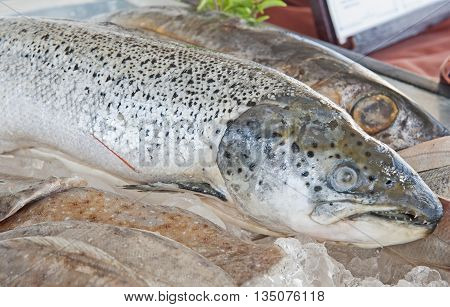 Salmon On Display In Fish Restaurant