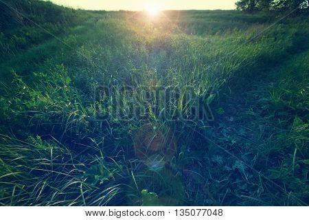 Green grassland in the Spring