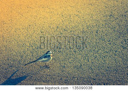 Bird on the road ( Filtered image processed vintage effect. )
