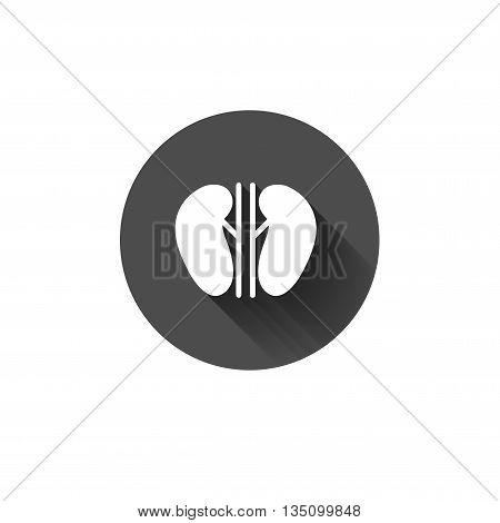 Vector kidney icon. Human interrnal abdomen organs