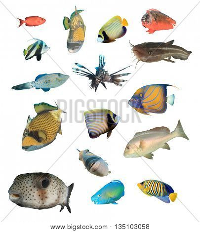 Tropical reef fish collection isolated on white background