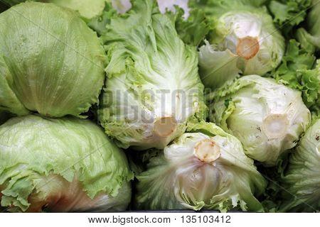 Fresh organic Iceberg Lettuce on Farmers Market