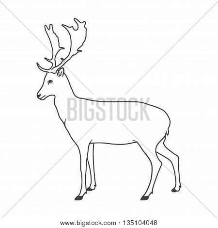 Wild deer. Vector illustration of royal stag. Isolated on white.