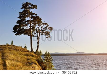 Summer landscape view landscape of tall spreading pine trees on the cliff at Irtyash Lake in Southern Urals Russia - summer landscape in sunny weather. Picturesque summer landscape of Urals nature
