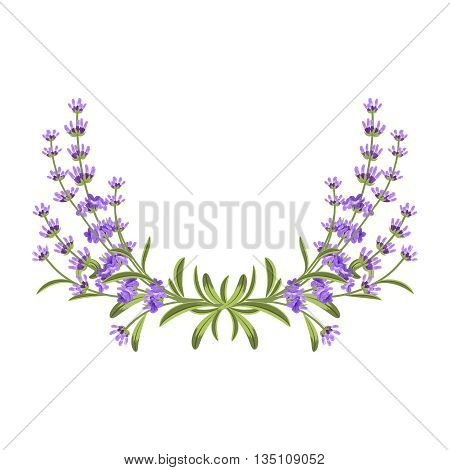 Lavender bunch. Vector floral frame. Floral flower, purple flower bunch, lavender flower illustration