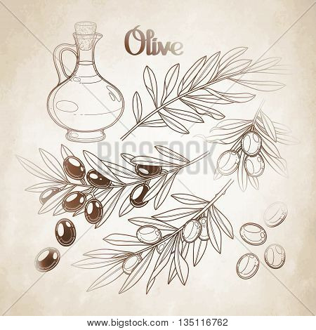 Graphic olive collection isolated on aged paper. Olives on the branches. Olive oil in the glass bottle. Vector natural design