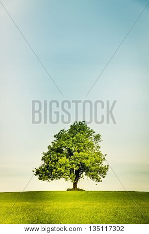 Lonely Tree On A Green Field