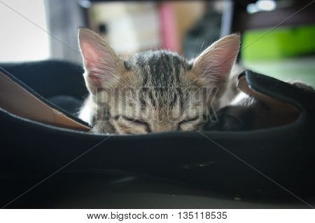 Adorable funny Cute Kitten cat close eye sleep tight put face in black shoe like a soft cloth bed at home
