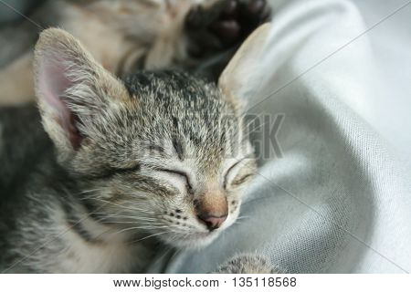 Adorable funny Cute Kitten cat close eye sleep tight with brother sister on white grey soft cloth bed at home