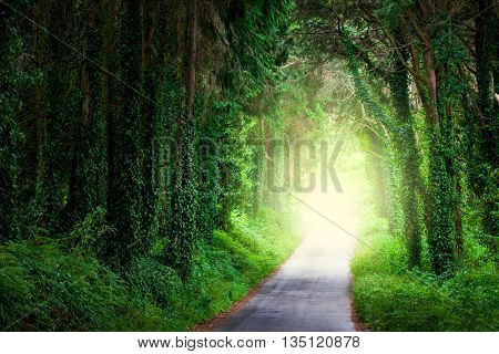 Road in magic dark forest from darkness to light and happiness
